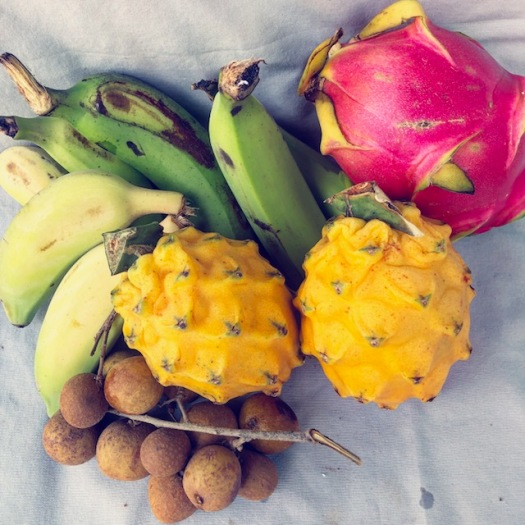 Variety of tropical fresh fruit dragon fruits